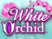 Слот Белая Орхидея